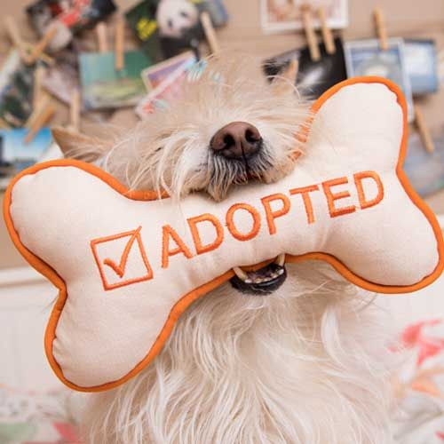 Fluffy Dog With An I M Adopted Squeaky Dog Toy In Her Mouth Dog Adoption Dog Toys Pet Gear