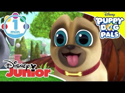 Disneyjunioruk Youtube Cute Puppy Videos Dogs And Puppies
