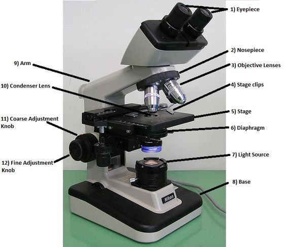 lab 1 introductory microscopy part 4 - 2 the light microscope introduction the light microscope is an indispensable tool of a working biologist its proper care and use is essential for success in biology 1001.