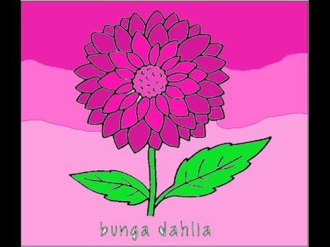 Paling Populer 27 Contoh Bunga Dahlia Gambar Bunga Cantik Bunga Dahlia Youtube 50 Gambar Bunga Cantik Indah Di Dunia Terlengka Di 2020 Bunga Dahlia Bunga Bunga Ungu