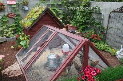 My little green roof chicken coop