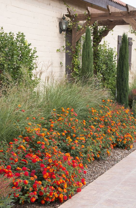 Dwarf Maiden Grass, texas lantana