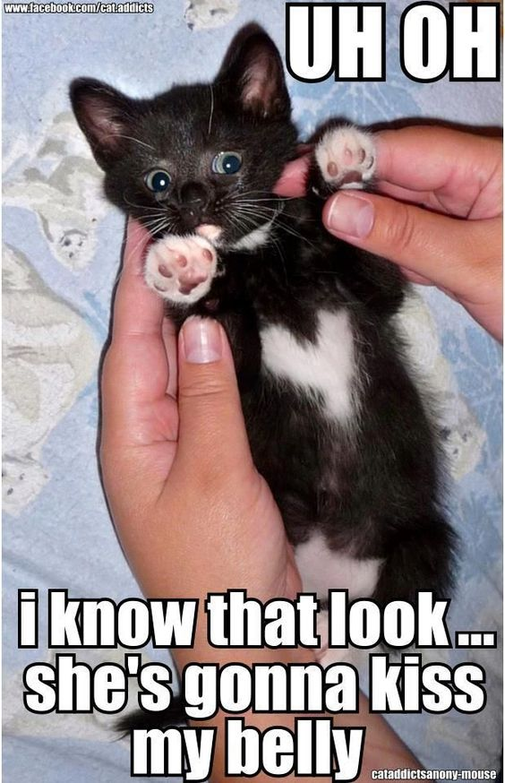 uh oh! #funnycat