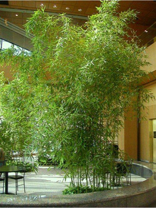 bambus garten im hause wachsen innengarten einrichten