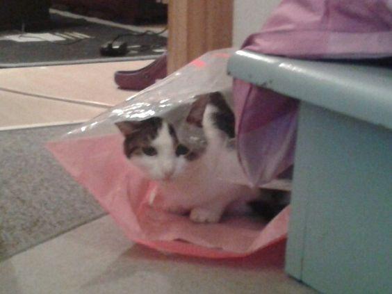 Taschen Katze