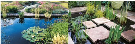 koi pond plants planting style