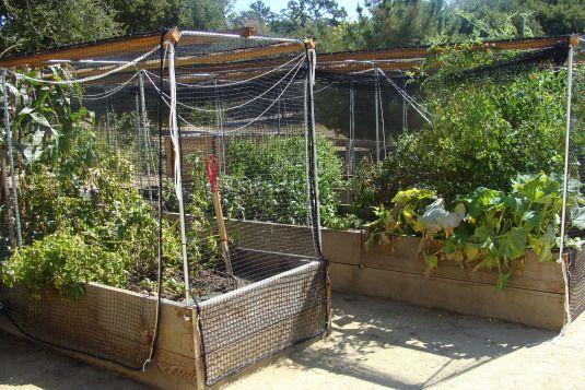 d05cc0a28a66a6e0da10b915894b8e72 - Vegetable Gardening In The Desert Southwest