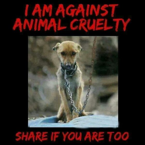 animal cruelty speech What is animal cruelty animal cruelty encompasses a range of behaviors  harmful to animals, from neglect to malicious killing most cruelty investigated.