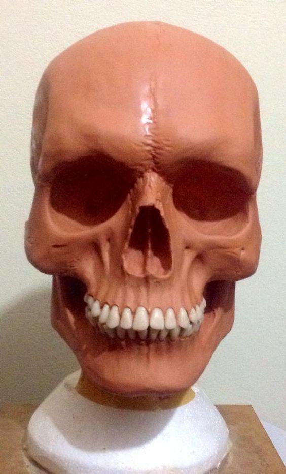 Estudo de anatomia crânio