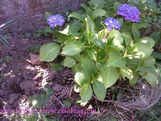 Blue tango blue tango blue - Le blog de Semper Rose