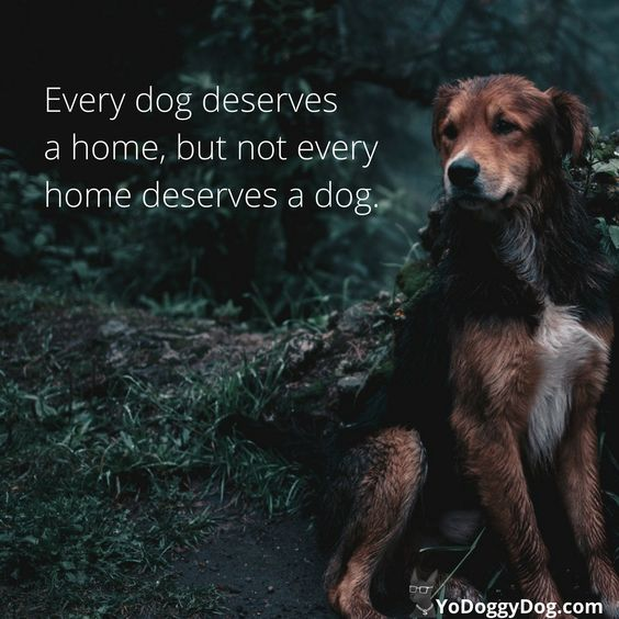 100 Dog Quotes Sayings To Make You Laugh Cry And Love Your Dog Even More Yo Doggy Dog Dog Quotes Dog Quotes Love Dog Quotes Funny
