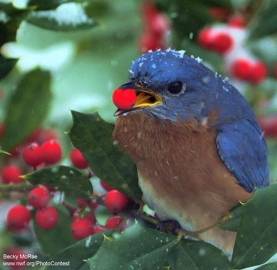 Bird and holly