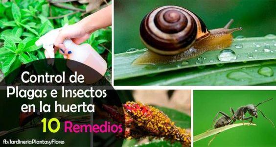 10 Remedios para el Control de Plagas e Insectos en la Huerta