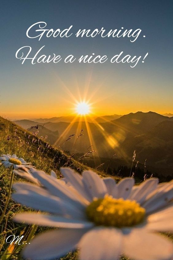 60 Beautiful Good Morning Have A Nice Day Images Nature Photography Flowers Good Day Sunshine Summer Nature Photography