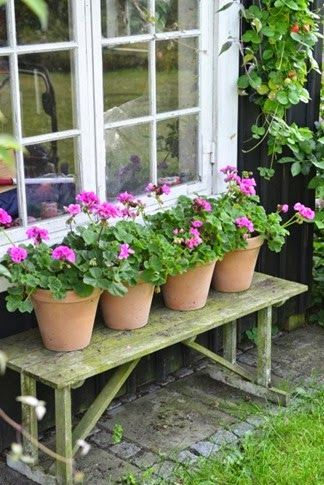 Geraniums in clay pots - perfect for a garden anywhere: