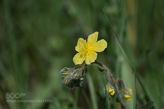 Grâce à moi on sait qui on est !... by Mamouette #nature #photooftheday #amazing #picoftheday