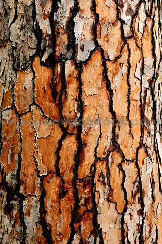 Stock Photo titled: Tree Bark Texture Close-up, unlicensed use prohibited