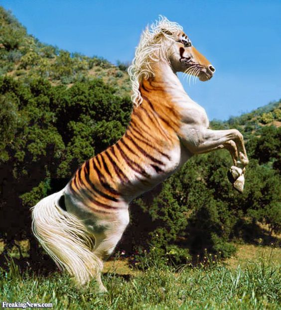 Tiger hybrid - photo#48