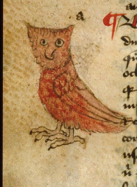 Lovely medieval owl: you can never see enough of them (BL Sloane 56).: