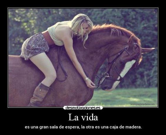 carteles vida quien compra caballo los caballos son bonitos desmotivaciones