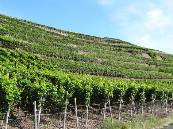 Vineyards zo ver je kijkt langs de hellingen van de bergen