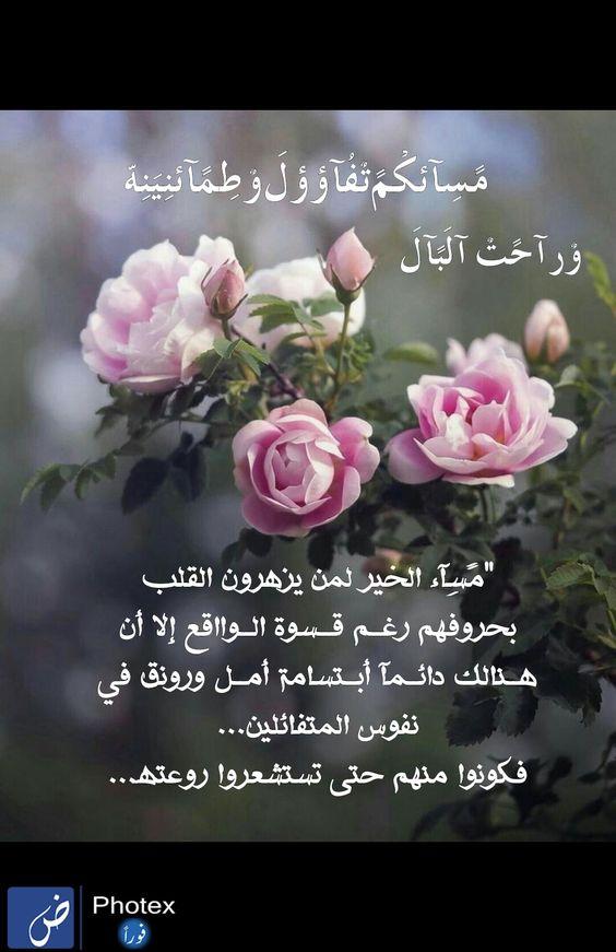 Pin By Hanan Allam On Hanan Love Flowers Flowers Rose