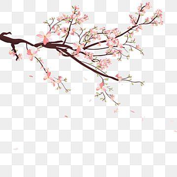 Millones De Imagenes Png Fondos Y Vectores Para Descarga Gratuita Pngtree Cherry Blossom Images Cherry Blossom Vector Cherry Blossom Petals