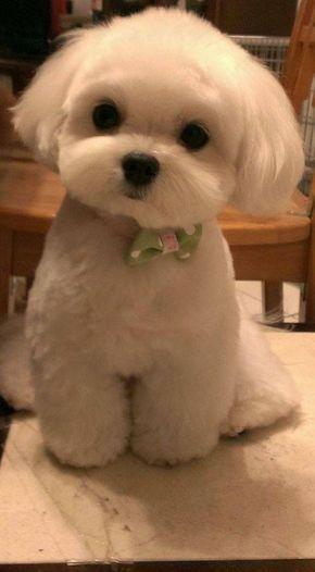 Awww Texas Poker Dewa Domino Poker Facebook Dewa Poker Capsa Susun Poker Online Live Poker Bandar Cute Dogs And Puppies Cute Animals Cute Baby Animals