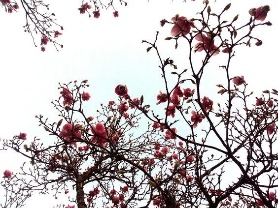 Flores. Vigo.
