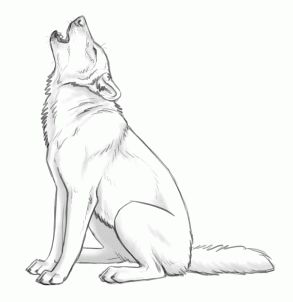 Wolf Howling Drawing Step By Step
