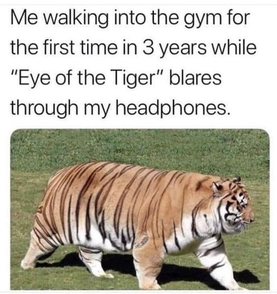 Important Tiger Memes To Get You Through Today Funny Relatable Memes Stupid Funny Memes Funny Animal Memes