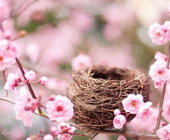 Para que sejas feliz faça um ninho entre flores pequenas e cheirosas e aguarde em breve um hospede que não dá trabalho e sim faz uma conexão direta com as leis superiores. . .  ° ' °~Sol Holme~° ' °  ❥═════════════❥