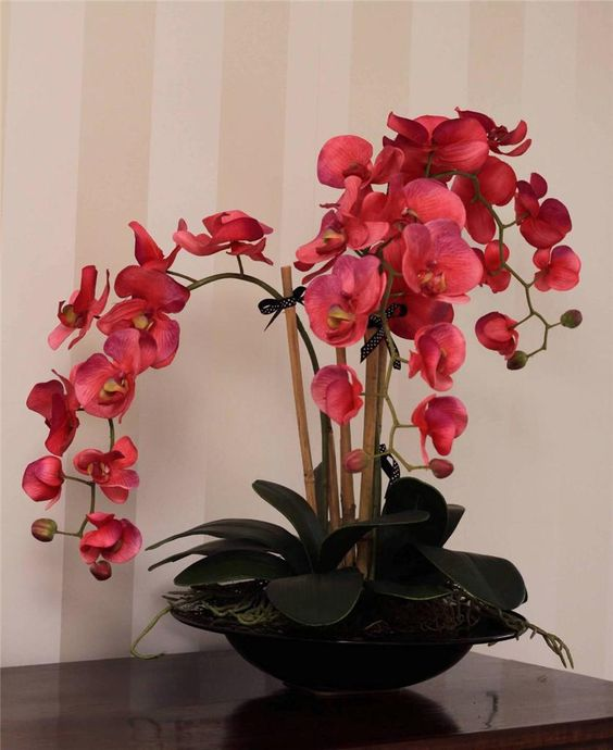 Pink orchids in black vase
