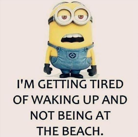 I'm getting tired of waking up and not being at the beach. Minion funnies: