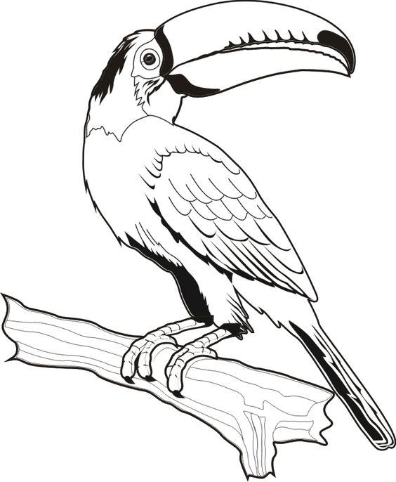 Desenho De Arara
