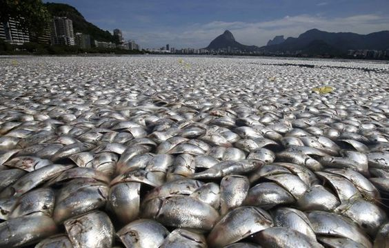 poissons morts pollution