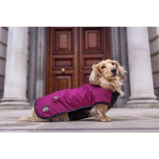Country And Twee Waterproof Burgundy Underbelly Luxury Dog Coat