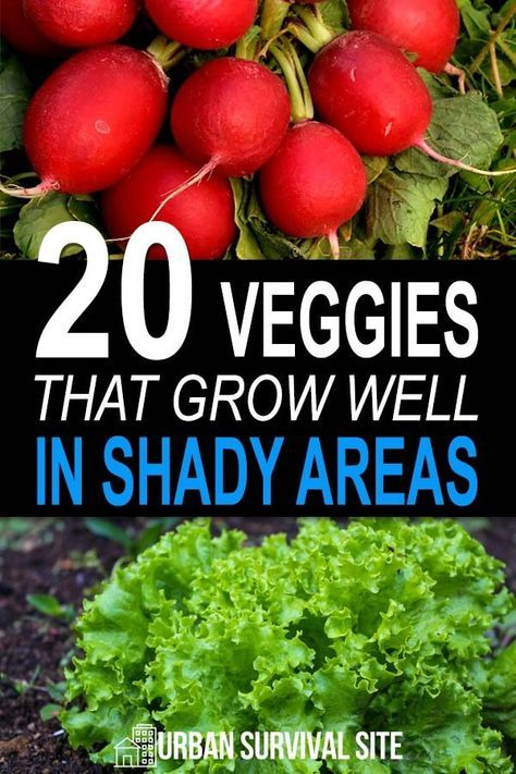 20 Vegetables That Grow Well In Shady Areas Vegetable Garden