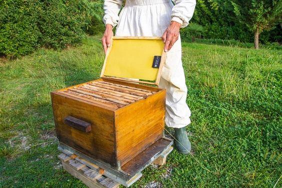 BeeGuard : un système de suivi à distance des ruches