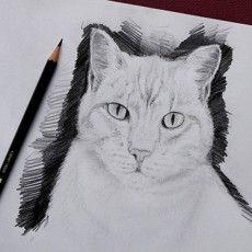 tutoriel de dessin en vid o pour dessiner un chat facilement avec dessin creation dessins. Black Bedroom Furniture Sets. Home Design Ideas