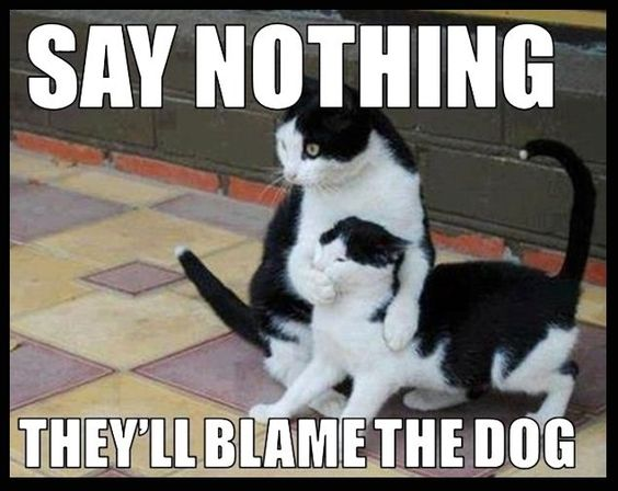 Say Nothing funny memes dogs cat cats meme lol funny quotes cute. humor dog. kitten: