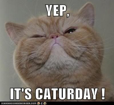 HAPPY SATURDAY / Happy Caturday: