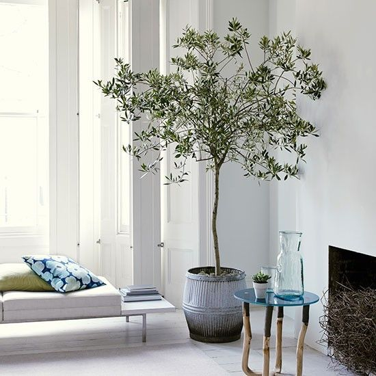White living room with olive tree gardens plants and Modern white living room decor