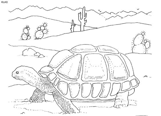 coloring pages of desert animals | Desert animals, Kids coloring pages and Kids coloring on ...