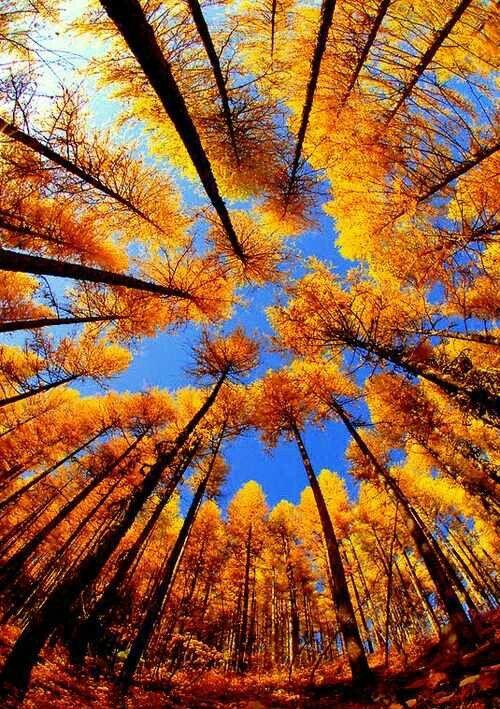 gorgeous autumn trees - árboles coloridos