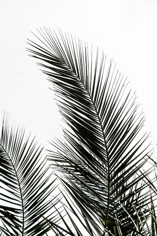 Palm Leaves Art Print by Mareike Böhmer Graphics And Photography