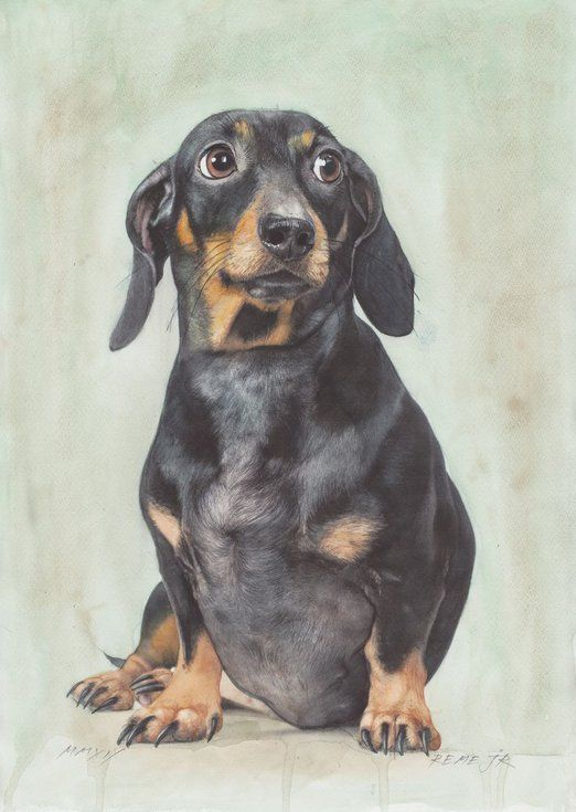 Dachshund Sausage Dog In 2020 Dog Paintings Dachshund Dogs