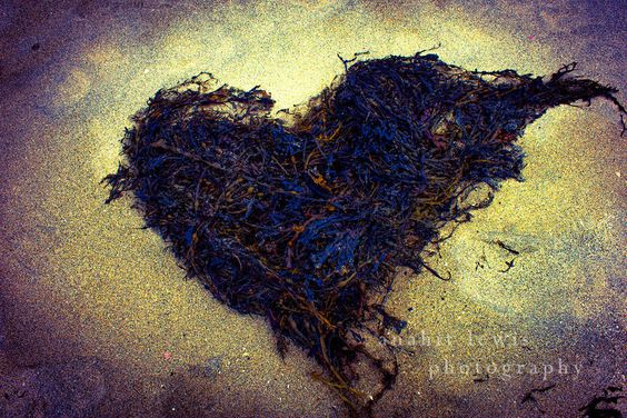 Hearts - Anahit Lewis http://www.anahitlewisphotography.com/  #hearts #heart