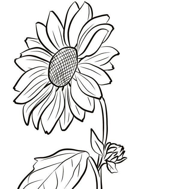 17 Gambar Bunga Matahari Yg Belum Diwarnai Di 2020 Bunga