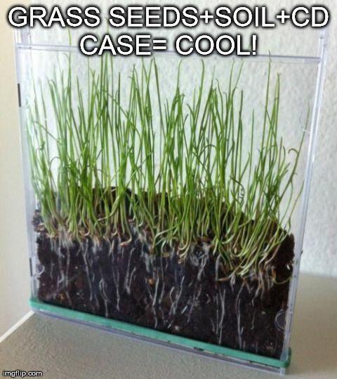 CD Case Planter